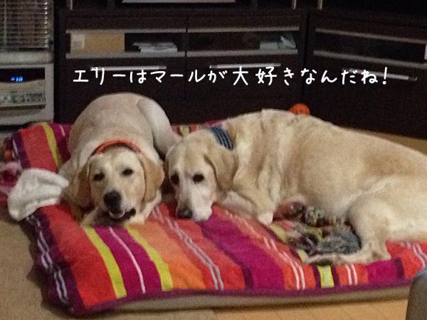 bed2_2014120221570143b.jpg
