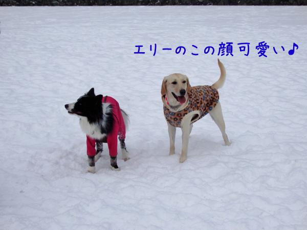 erikawaii_20141213215302914.jpg
