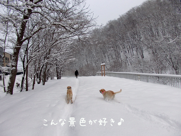 kawa_20141224205042b0a.jpg