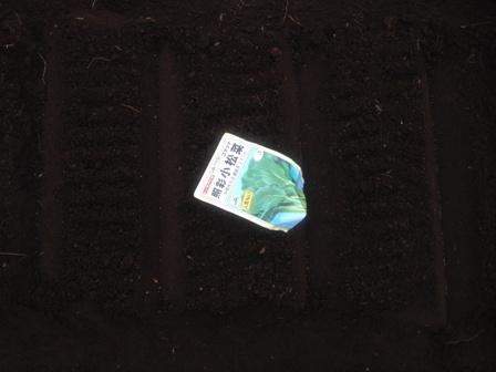 小松菜種蒔き