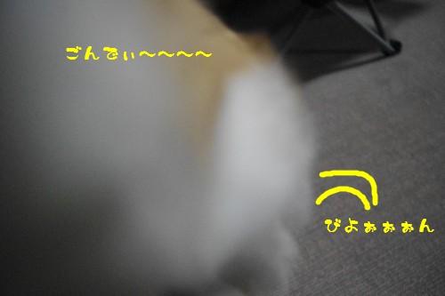IMGP7788.jpg