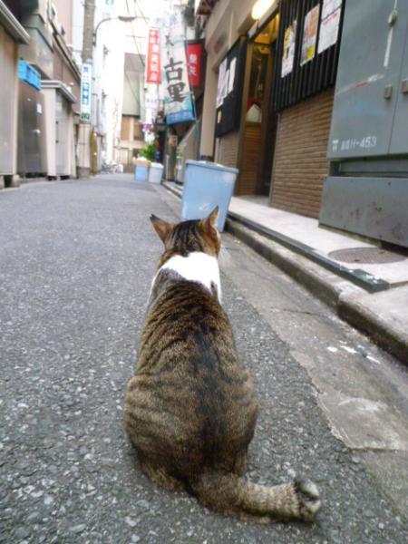 ネコちゃん♪