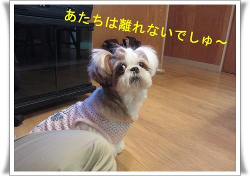 軽井沢 029