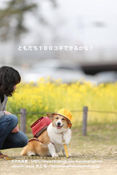 C29V1288.jpg