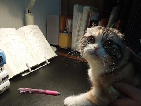 勉強してましゅ