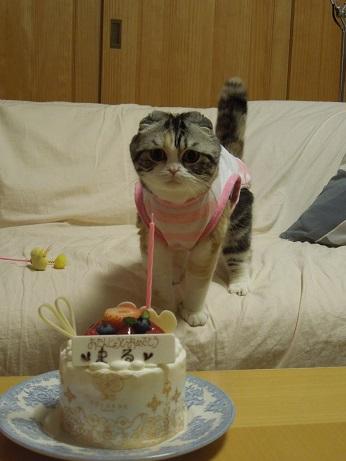 まるケーキをねらう