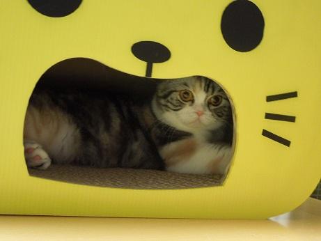 黄色いネコさんの中でしゅ
