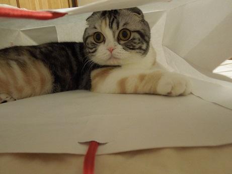 紙袋に隠れてましゅ