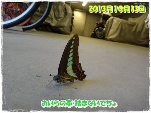 20131015-10.jpg
