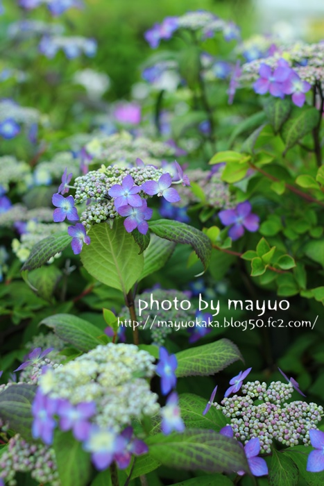 photo by mayuo