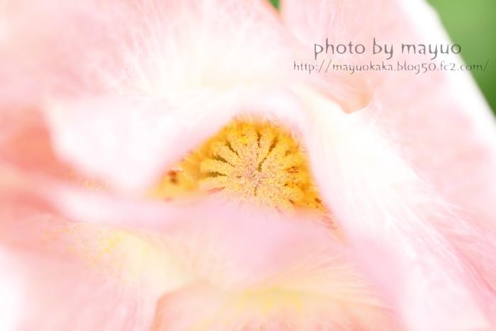 photo by mayuo4