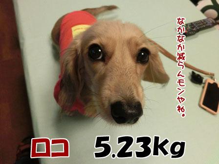 http://blog-imgs-60.fc2.com/m/e/r/meruloco/013_201310252306376de.jpg