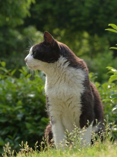 昭和記念公園の猫