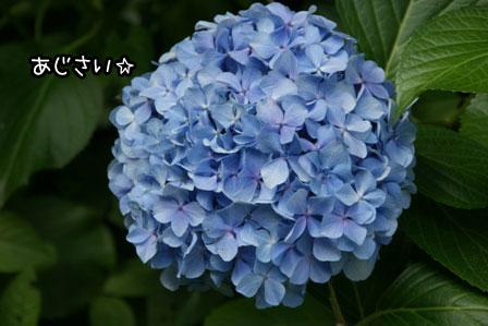 10_20130625205703.jpg