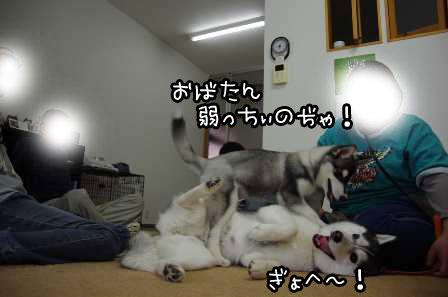 17_20130331214842.jpg