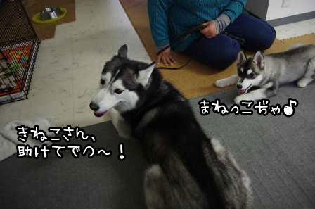 20_20130324220547.jpg
