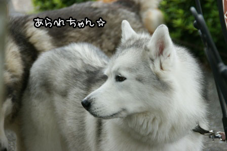 22_20130702192730.jpg