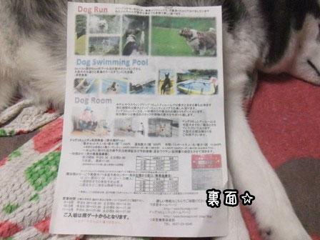 2_20130515213327.jpg