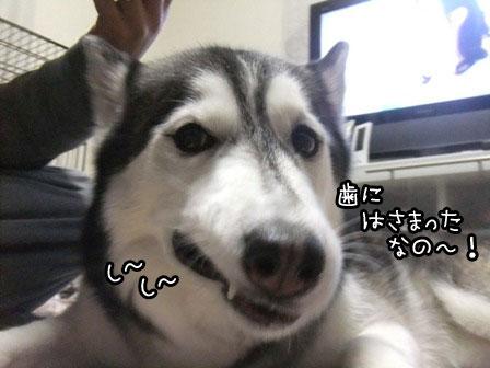3_20130410210513.jpg
