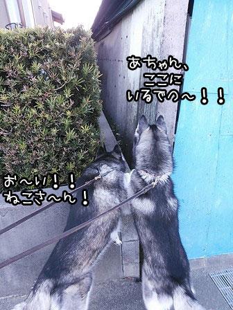 4_20130325221603.jpg