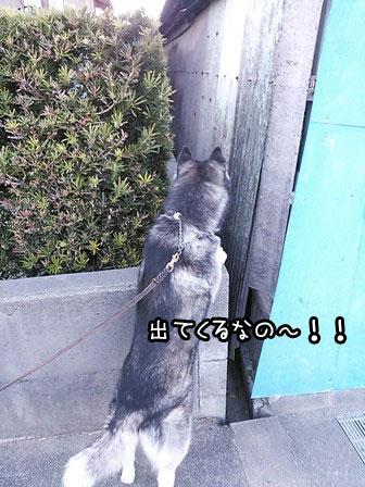 5_20130325221608.jpg