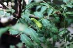 幼虫1308191