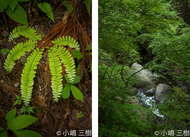 入門大柳川渓谷130527-5