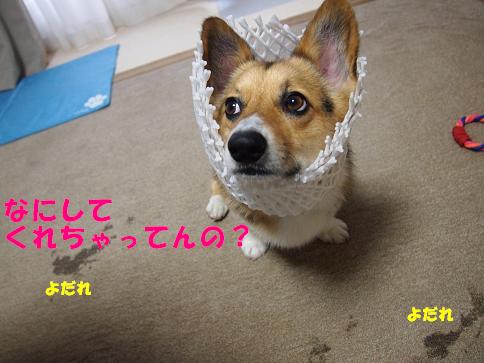 めろんちゃん6
