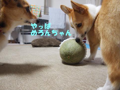めろんちゃん11