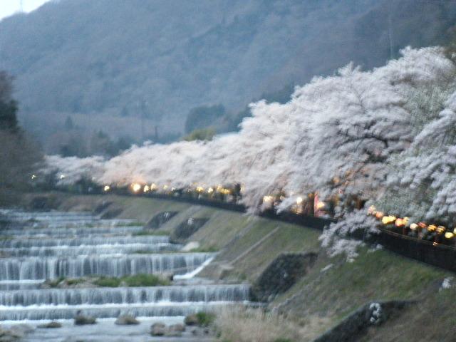 2012年桜 015