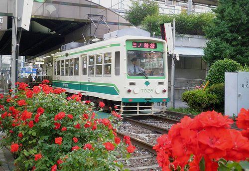 都電大塚駅前のバラ(2013年5月15日)3