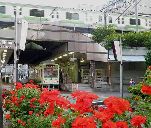 都電大塚駅前のバラ(2013年5月15日)2