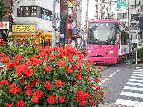 都電大塚駅前のバラ(2013年5月15日)1