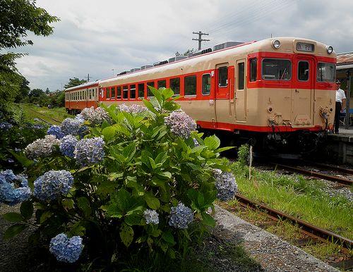 いすみ鉄道キハ28 2346+キハ52 125(2013年6月30日・国吉駅)2