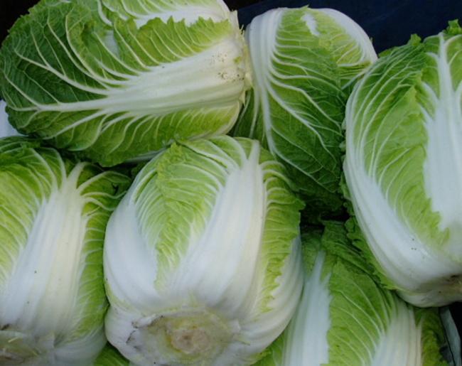 131116白菜 (3)