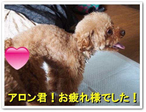 20130926_088.jpg
