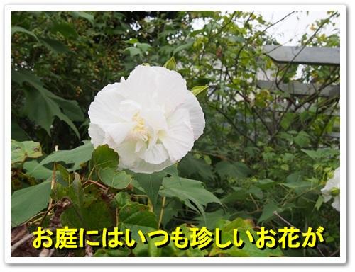 20130926_099.jpg