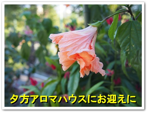 20130929_047.jpg