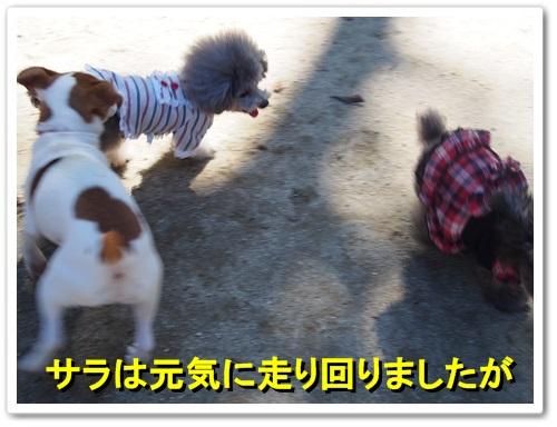20131027_038.jpg