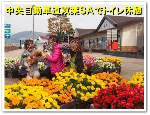 20131109_036.jpg