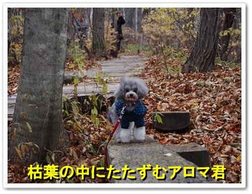 20131109_129.jpg