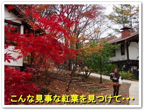 20131109_203.jpg