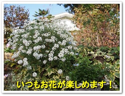 20131111_462.jpg