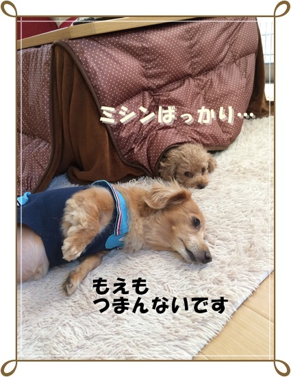 IMG_2420.jpg