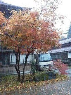 もみじと雪1384139479463