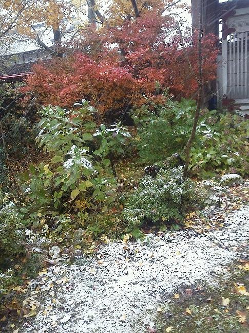 紅葉と雪KIMG0108