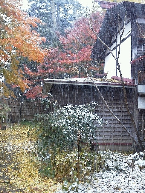雪と京もみじKIMG0121