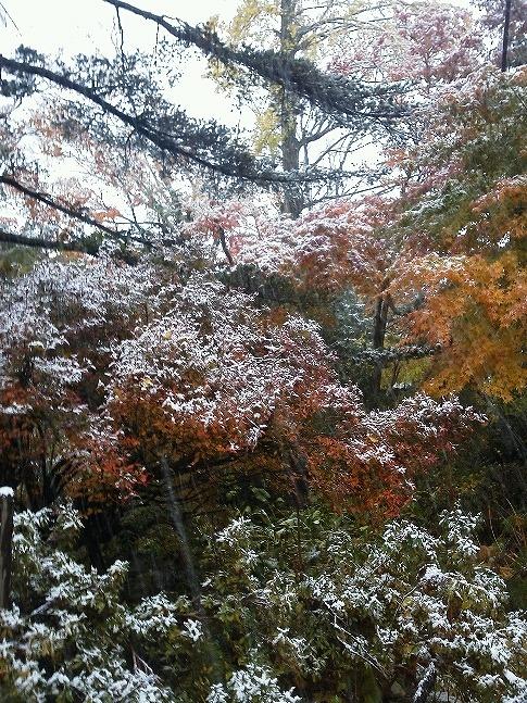 池付近、雪と紅葉KIMG0116