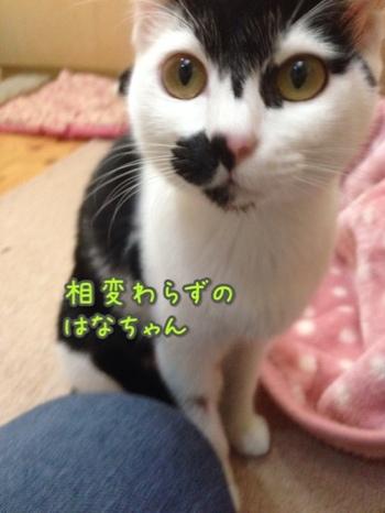 fc2blog_20140920164320f5e.jpg