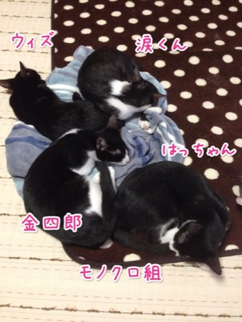 fc2blog_20140920164948ddb.jpg